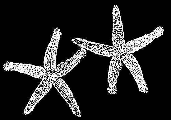 Seesterne